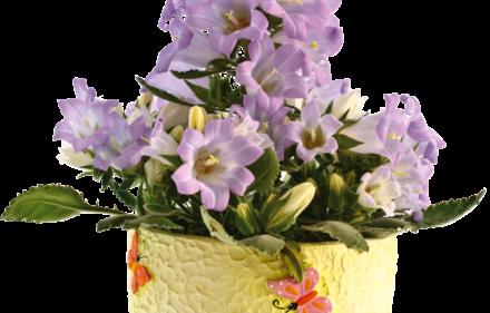 flor goivo shutterstock 75566746 Peredniankina 440x281 - #SIMRetrô com Tita de Paula
