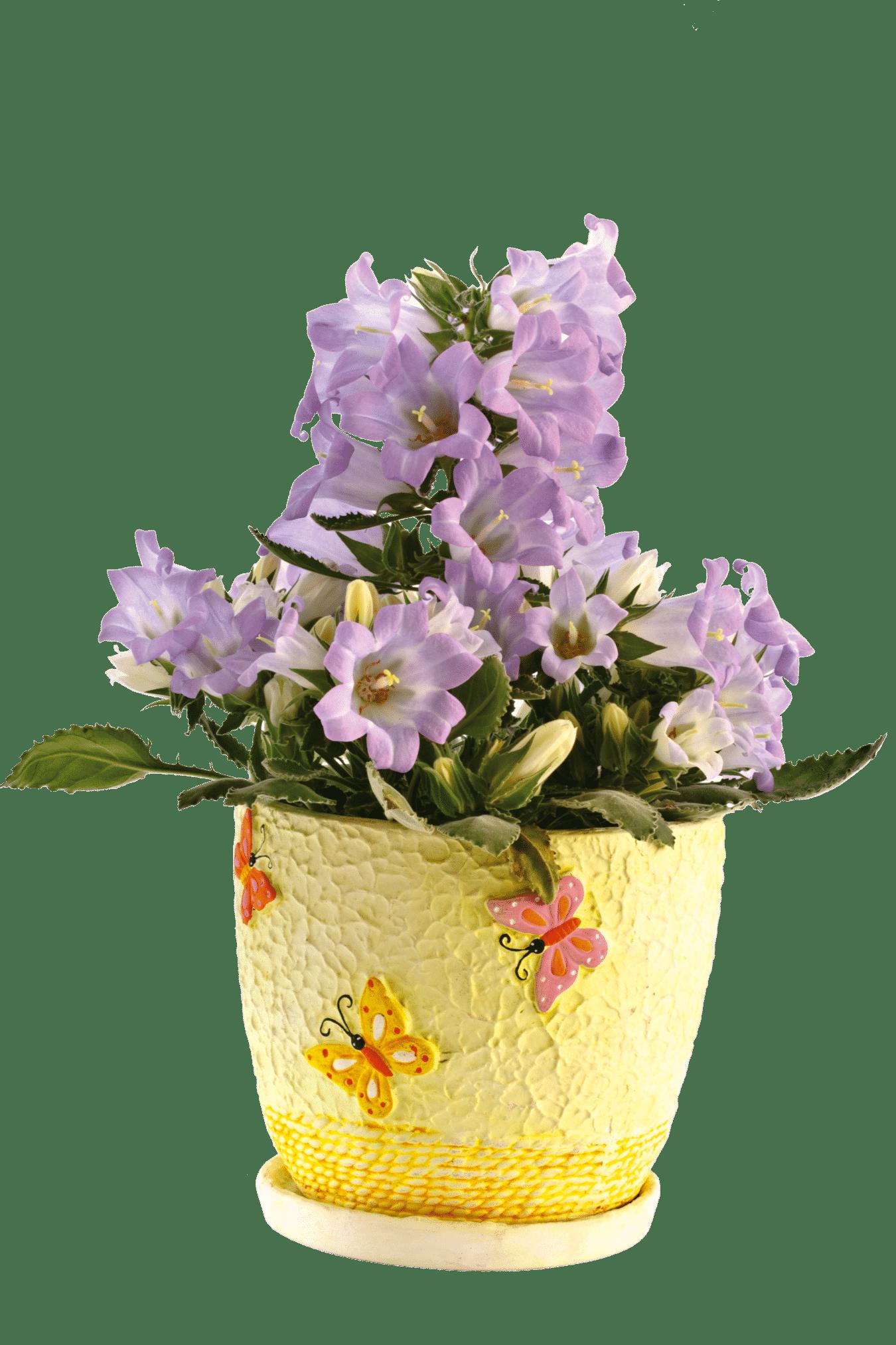flor goivo shutterstock 75566746 Peredniankina - #SIMRetrô com Tita de Paula