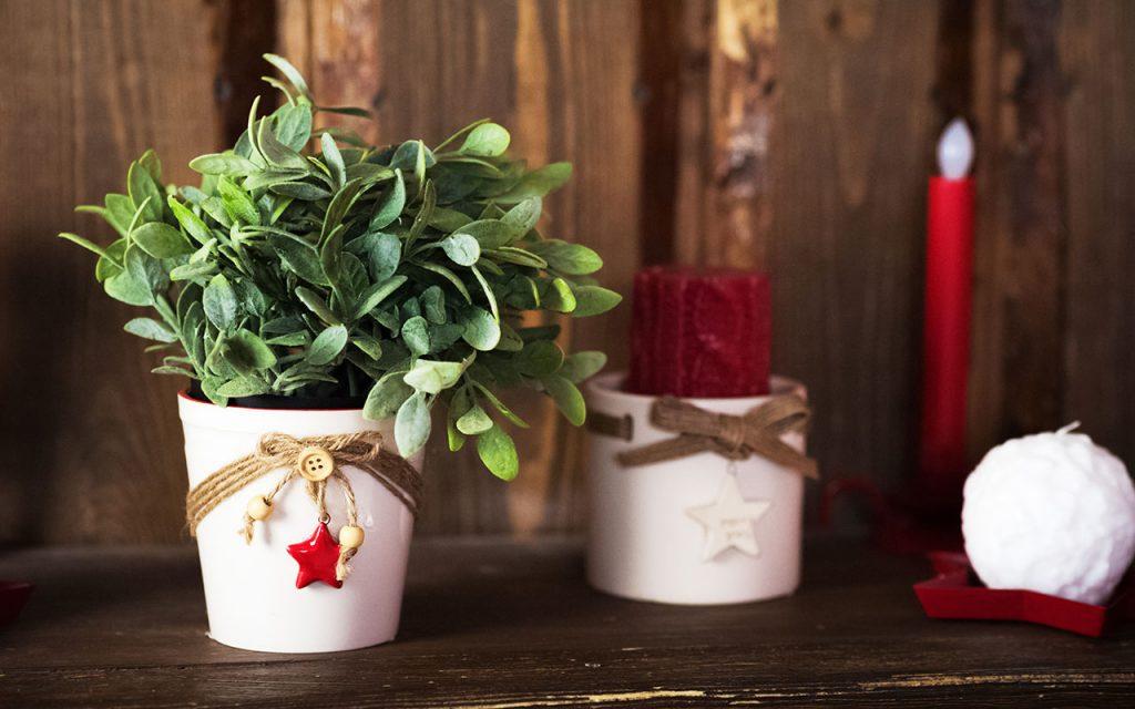 3 Plantas SoNelly Shutterstock.com  1024x640 - Anote as dicas para renovar a casa para as festas de fim de ano
