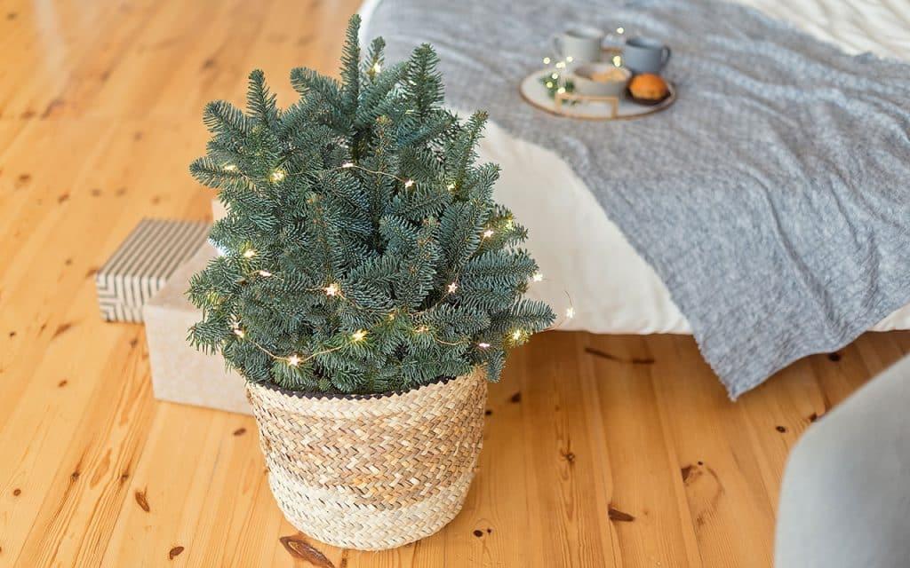 2 Minimalista gostua Shutterstock.com  1024x640 - Separamos alguns modelos de árvore de natal para você se inspirar